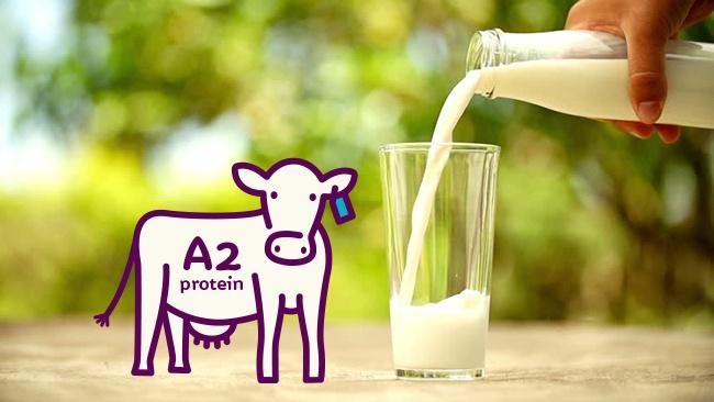 Nồi nấu sữa bò